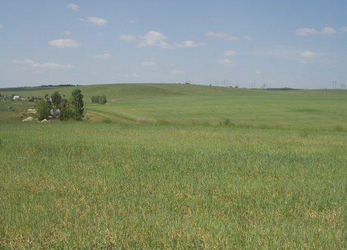 Місце розташування найбільшого поселення трипільської культури на території Київської області, біля с. Щербанівка